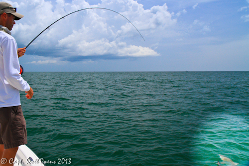 St simons and jekyll island sharks on the fly for St simons island fishing report