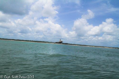 St simons and jekyll island sharks on the fly for St simons island fishing