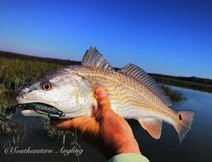 Redfish report for Saint Simons Island Jekyll Island