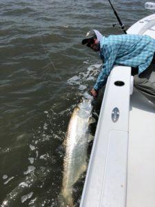 Cumberland island tarpon fishing report