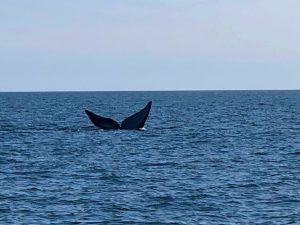 Right Whale visitors to the Golden Islas